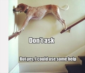 funny-dogs-needs-your-help